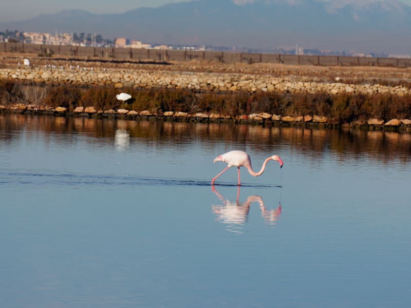 Flamingos in Las Salunas Marchamalo salt flats - Photo credit: Tuckfook Ng