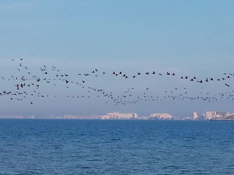 Migration - Photo credits: Toñi Blasco