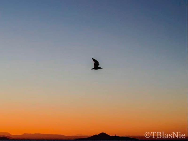 Flying over an orange sunset - Photo Credits: Toñi Blasco