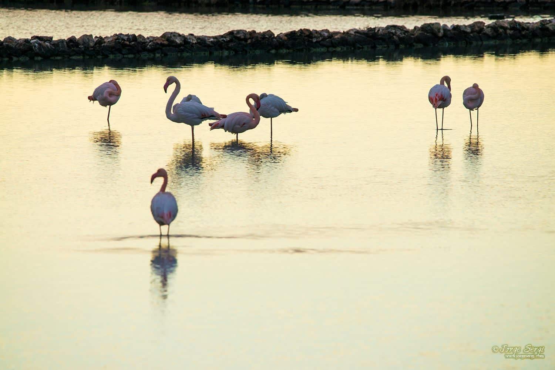 Flamingos in Las Salinas - Photography: Jorge Sergi