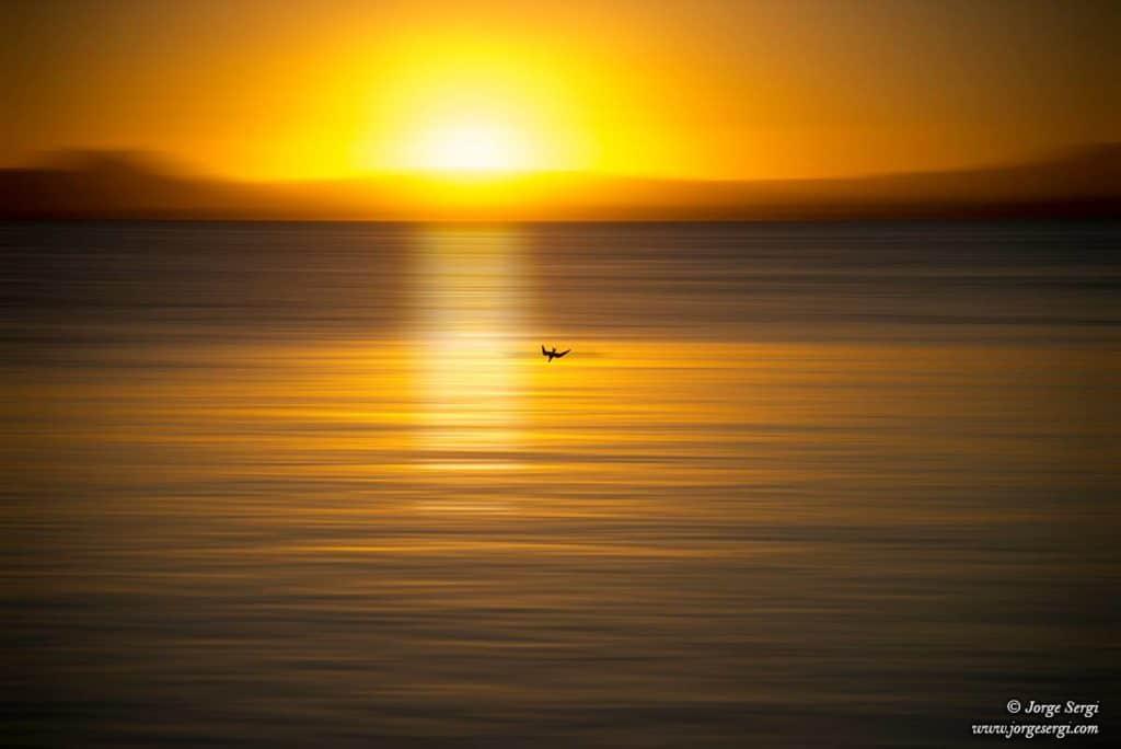Volando al amarillo