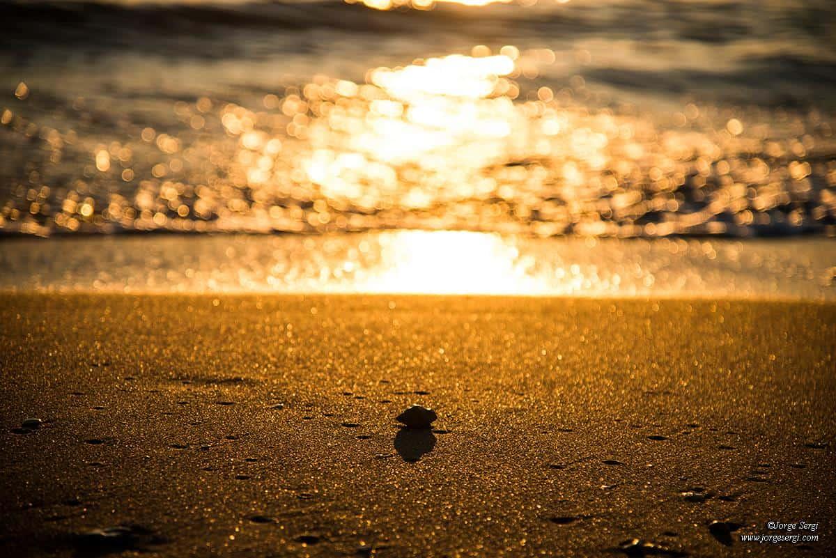 Golden sun on the beach