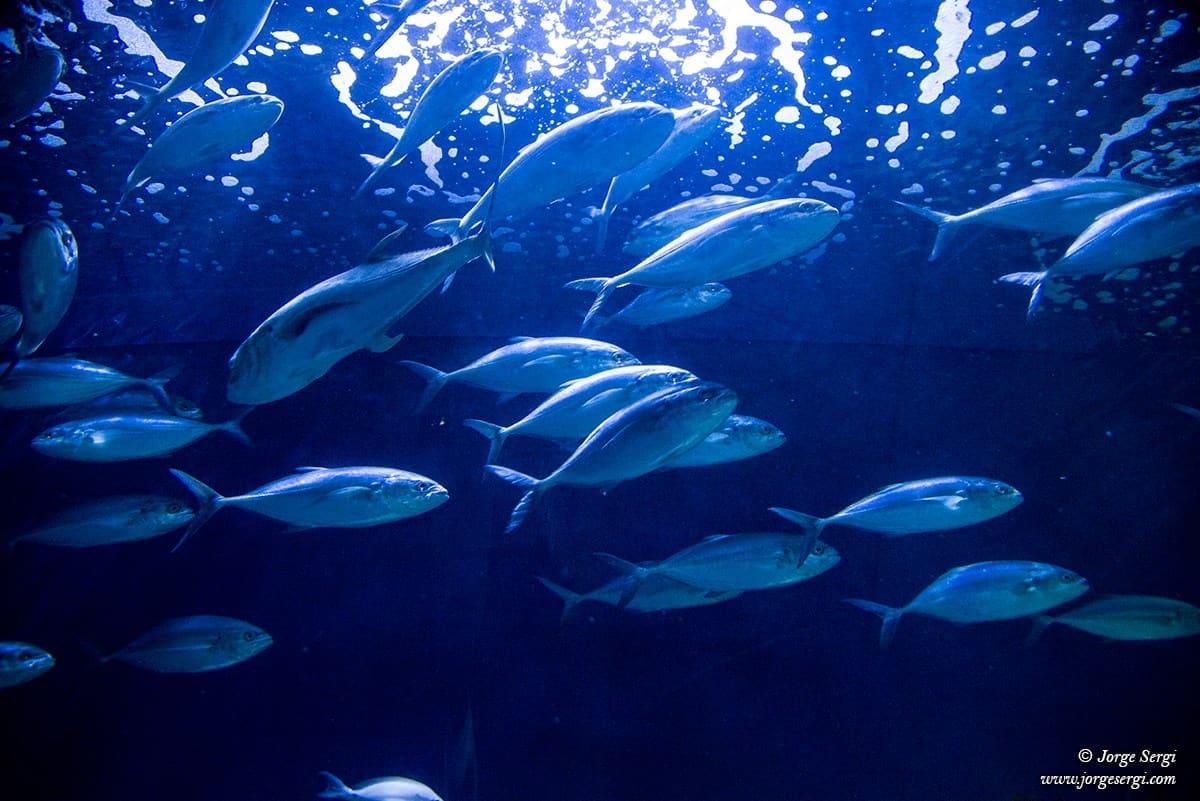 Our beautiful marine life