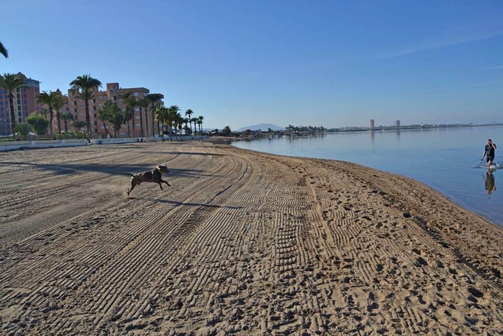 Perro jugando en la playa de Playa Honda