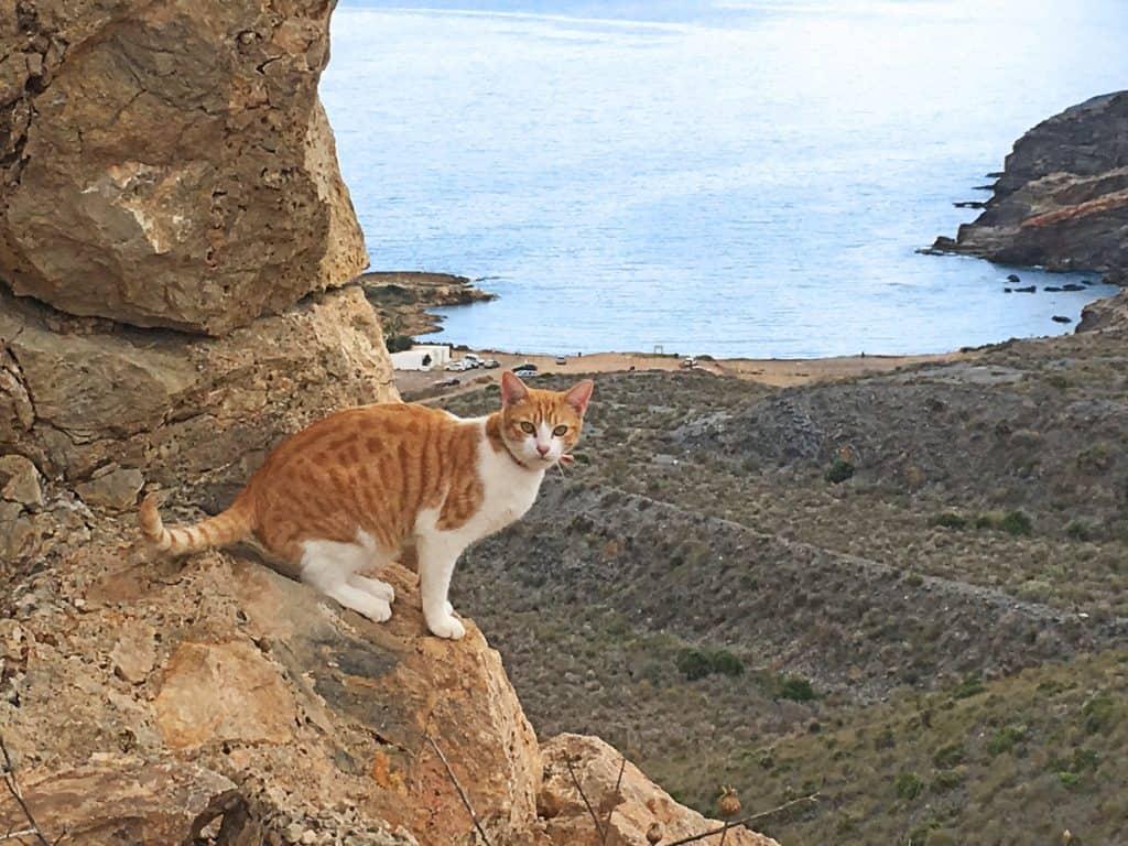 Hermoso gato con Cala Reona al fondo