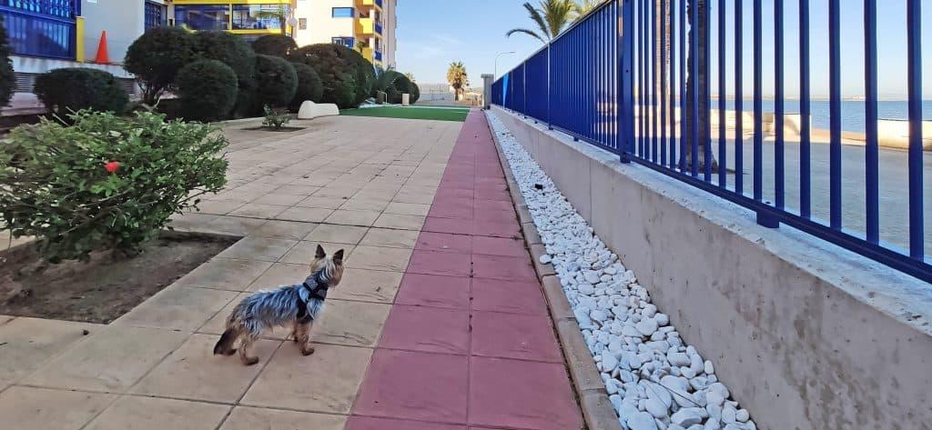 Lindo perro en el edificio Verdemar 2 Playa Honda