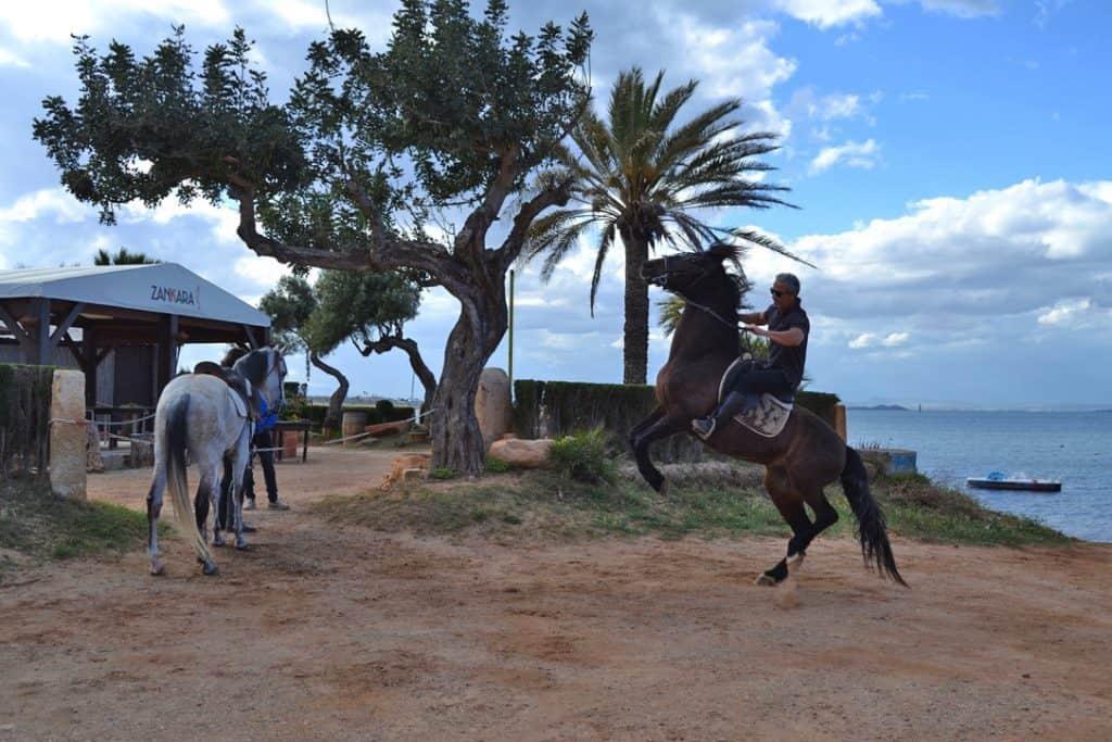 Caballos fuera de Zankara en Playa Honda