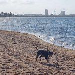 perro disfrutando la playa de Playa Honda