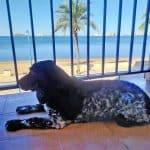 perro en balcón disfrutando las vistas